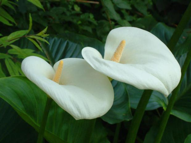 fiore_bianco_1024x768