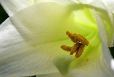 fiore_bianco_gr